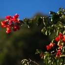 Pensioners special offers holiday accommodation at Blommekloof, in the Leeukloof Valley, near Oudtshoorn and Mossel Bay